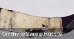 Greenville Swamp Rabbits tickets